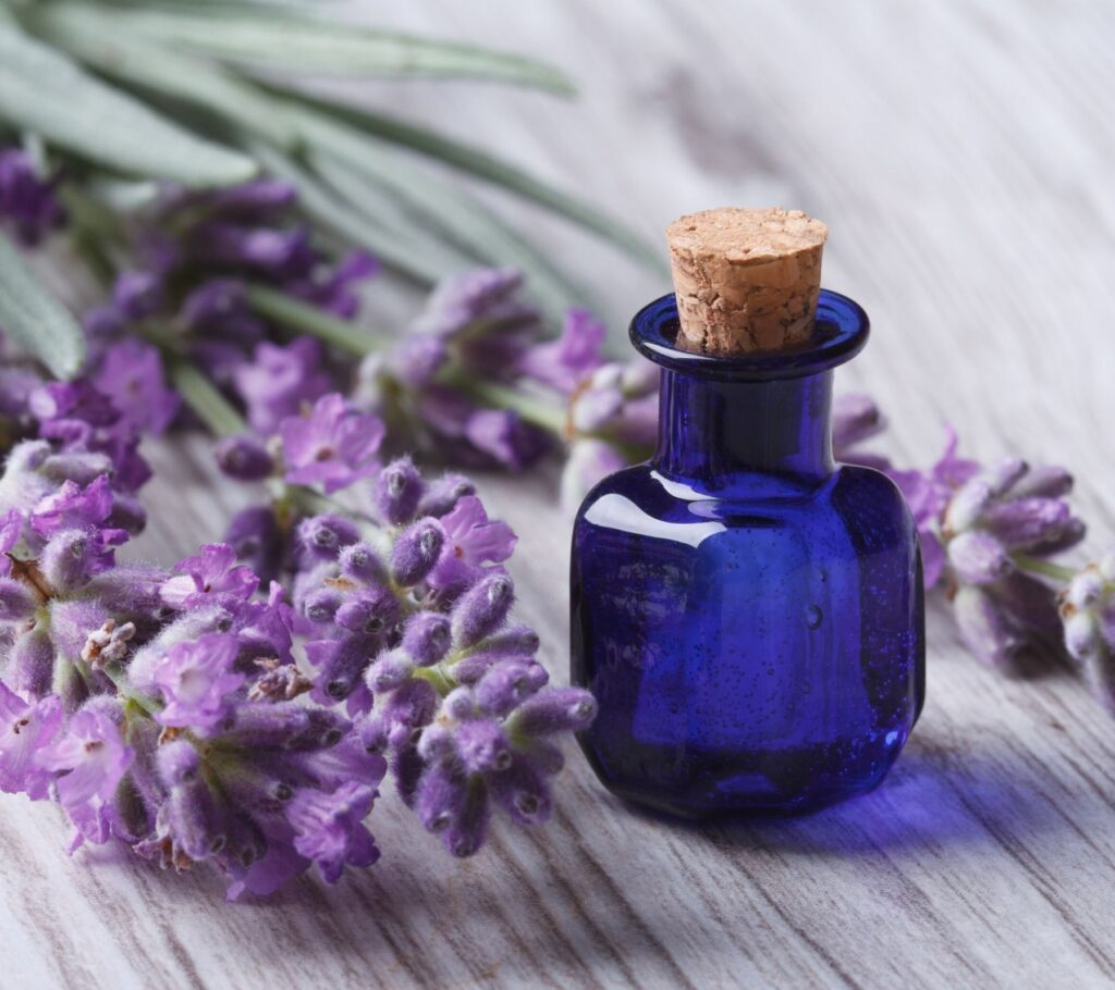 blue lavender essential oil bottle with lavender flowers next to it