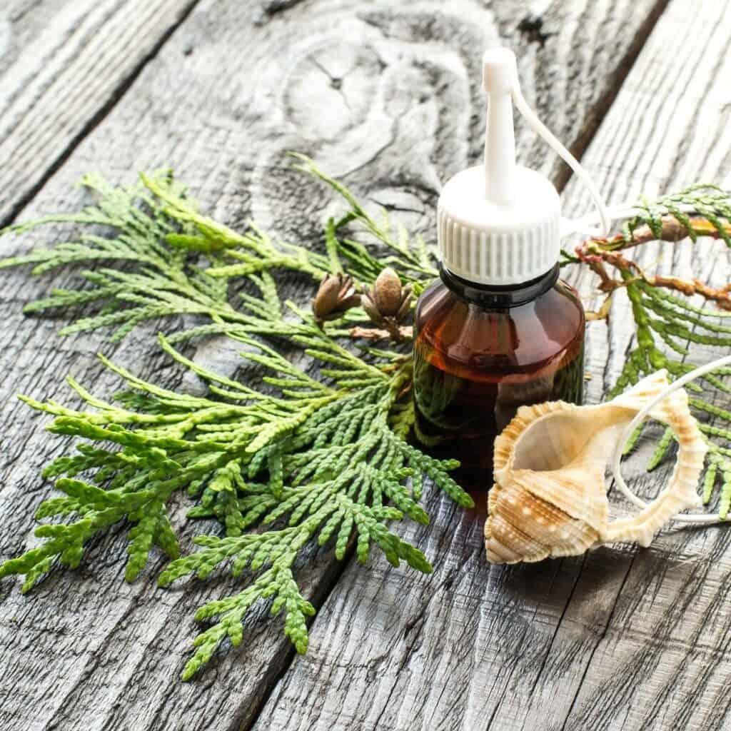 bottle of Arborvitae Essential Oil
