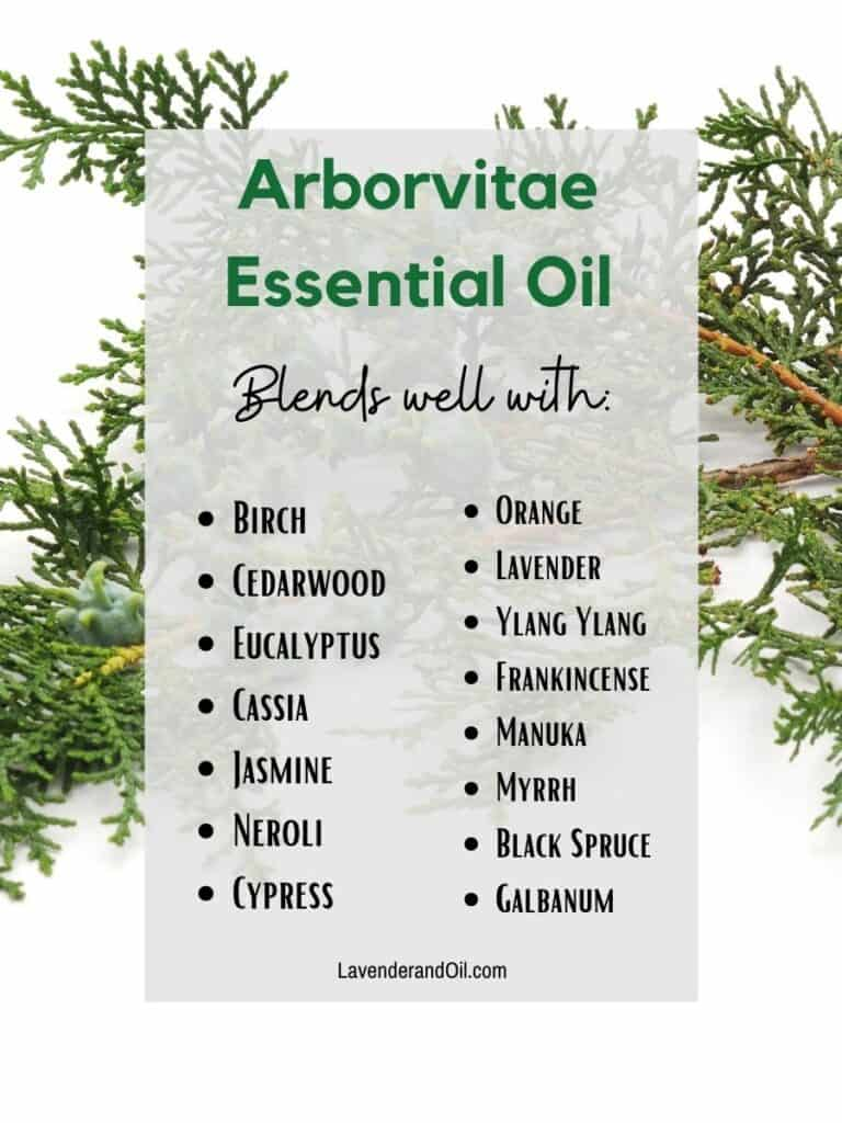 arborvitae essential oil branch with text overlay of other oils that blend well