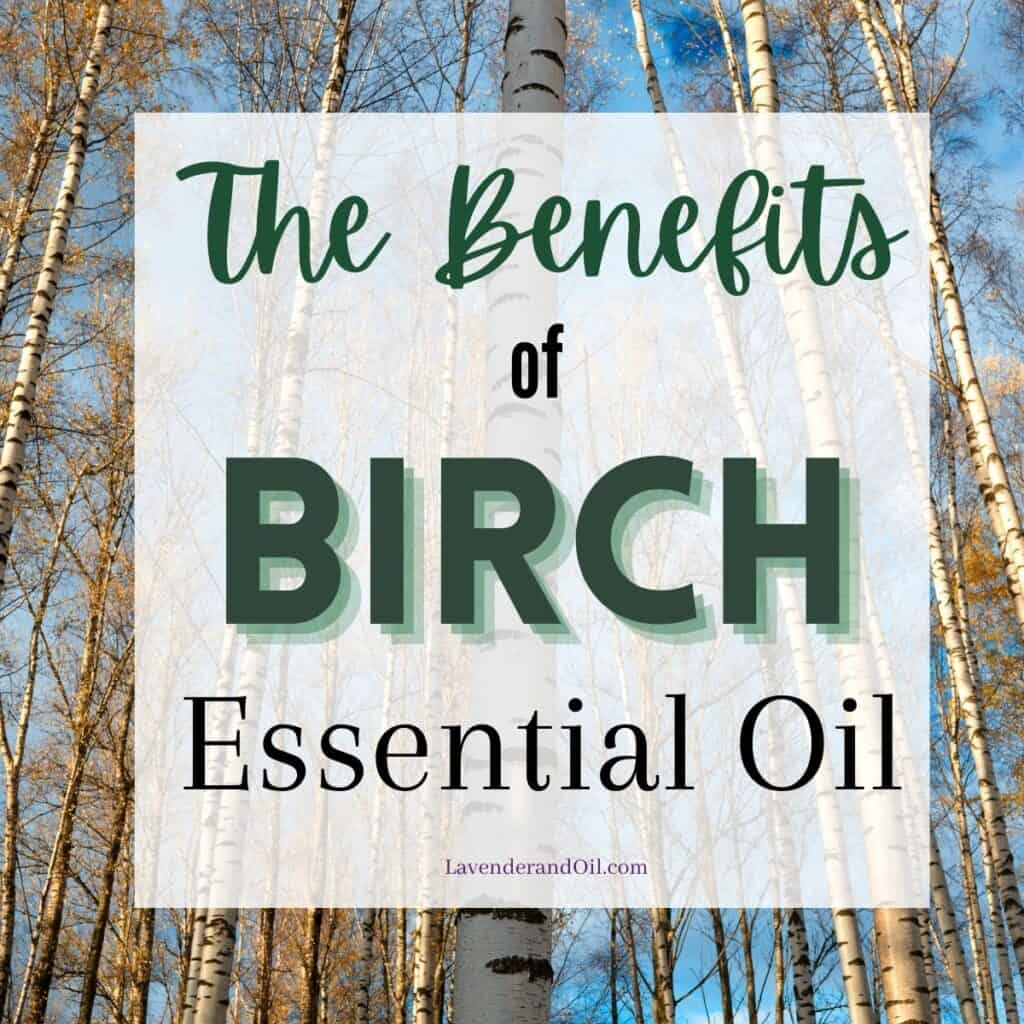"""birch trees with text overlay saying """"the benefits of birch essential oil"""""""